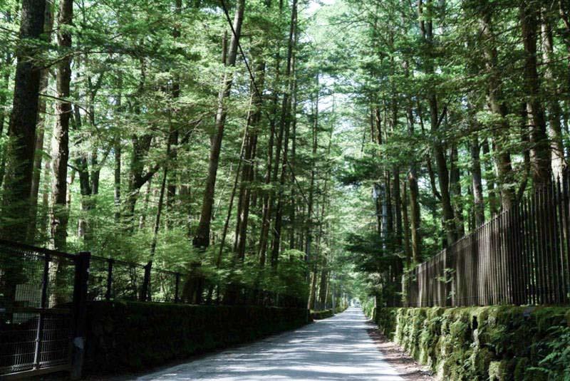 旧軽井沢 鹿島の森