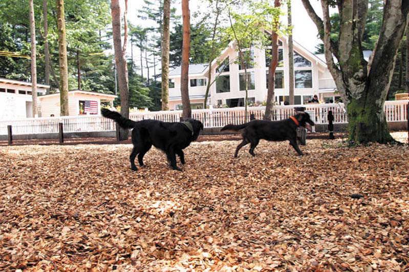 出典:http://www.dogdept.com/dogrun/karuizawa.html